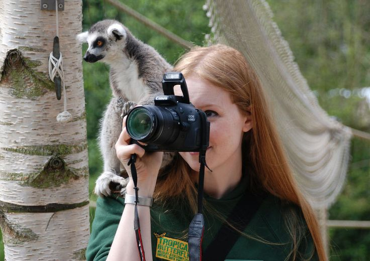 Lemur Helps Take A Photo At The Tropical Butterfly House, Wildlife & Falconry Centre, Sheffield