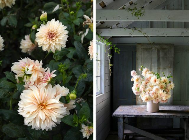 Author Interview Christine Chitnis Floret Flowers Flowers Author Christine