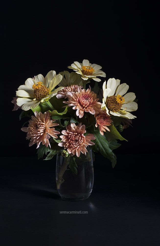 Bouquet Of Zinnia And Chrysanthemum Flowers Low Key Still Life With Bouquet Of Zinnia And Chrysanthemum Flowers Black Background Chrysanthemum Flower Flowers