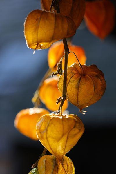 Lanterns for Autumn:
