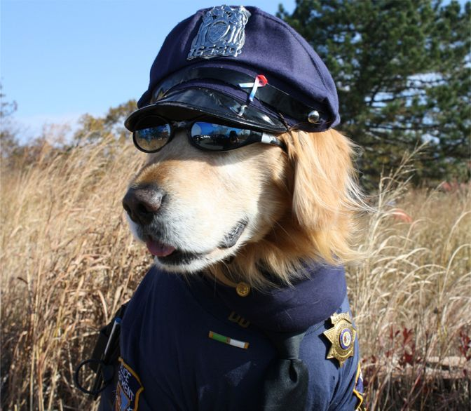 Wonderful Outfit Army Adorable Dog - b7d7f6aa9803cec975cd497d70c5c2b0--badge-bunny-k-police  Pictures_715529  .jpg