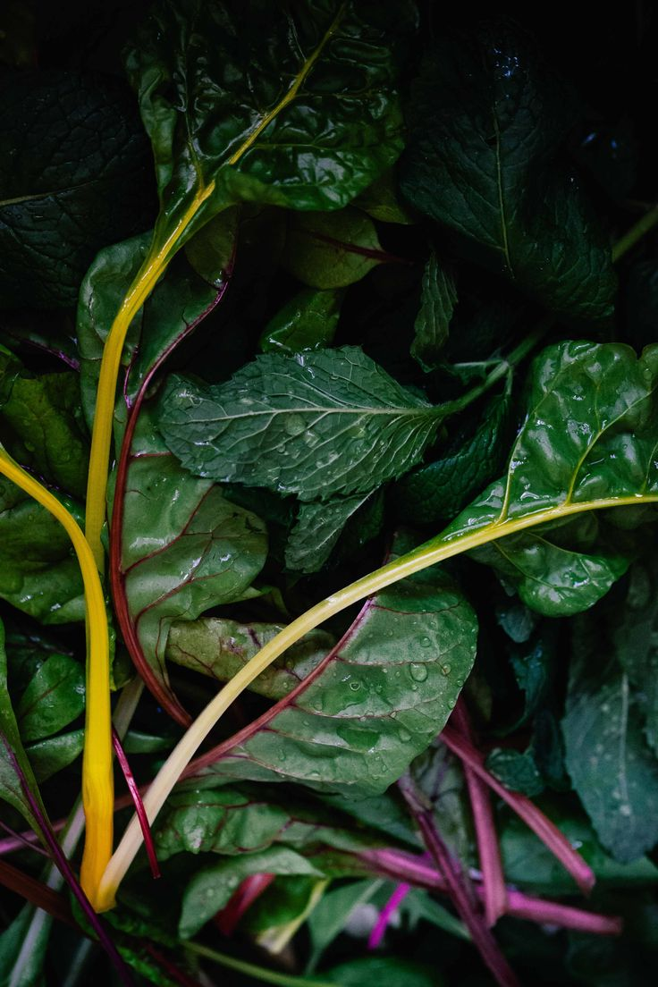 Homegrown silverbeet and mint for my feta cheese and filo burek.  Photogrpahy by Dara Tippapart. Copyright 2016.   Silverbeet, mint, herbs, vegetables, homegrown, vegetarian, burke, feta, cheese, pastry, filo, baking, cooking, food photography, Dara Tippapart