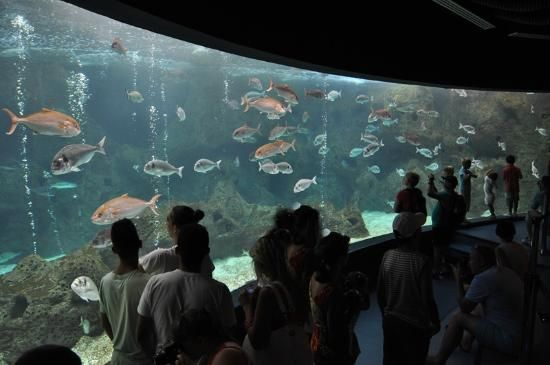 Creta Aquarium