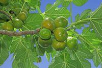 Arbre fruitier : plantation, entretien et taille - Fiche pratique