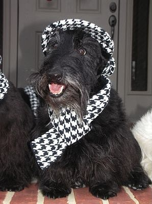 216 Best Marty Images On Pinterest Scottie Dogs