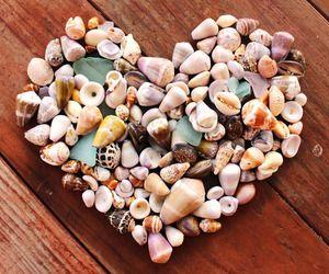 shells | via Tumblr