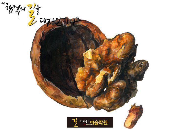 호두-개체묘사 디자인 입시전문 길미술학원