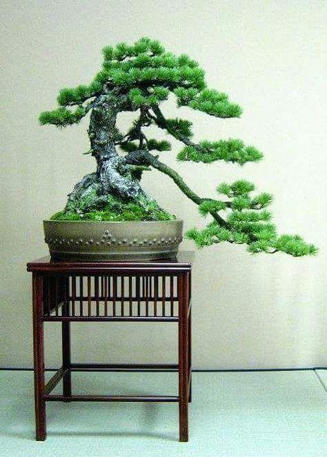 Small Bonsai Tattoo: 25 Best Bonsai Tree Tattoos Images On Pinterest