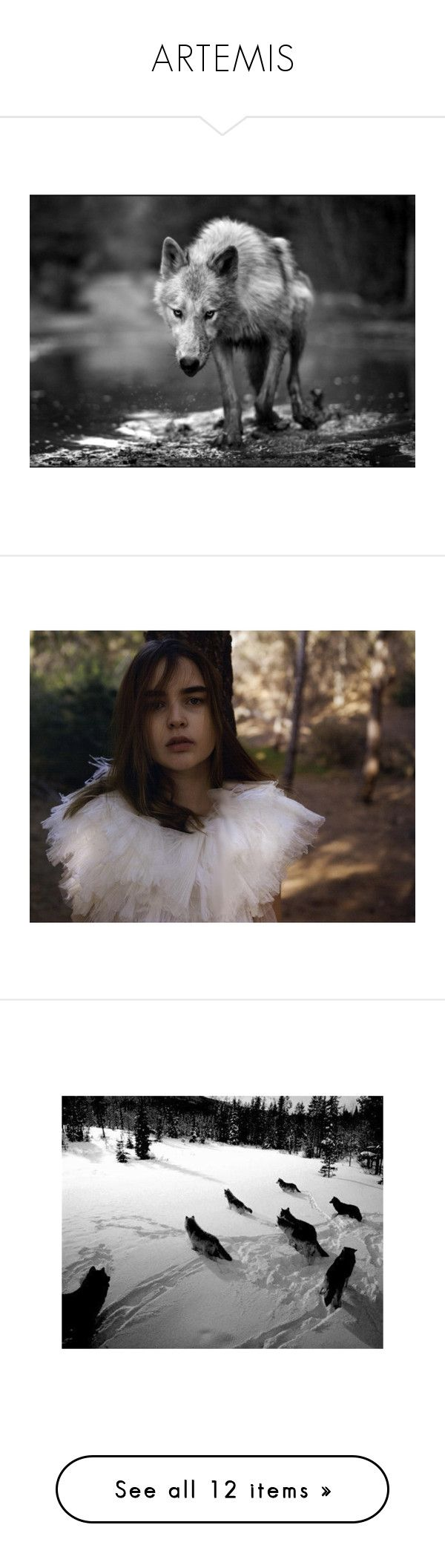 """""""ARTEMIS"""" by greekgodaesthetic ❤ liked on Polyvore featuring animals, pictures, wolf, backgrounds, wolves, ali michael, editorials, images, pics and photos"""