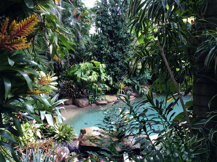 1000 images about landscape tropical dennis hunsdcheidt for Tropical pool gardens