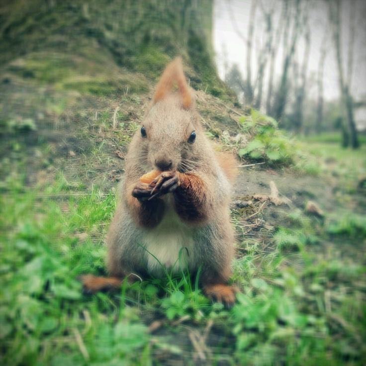 squirl @Park Łazienkowski, Warszawa, Poland