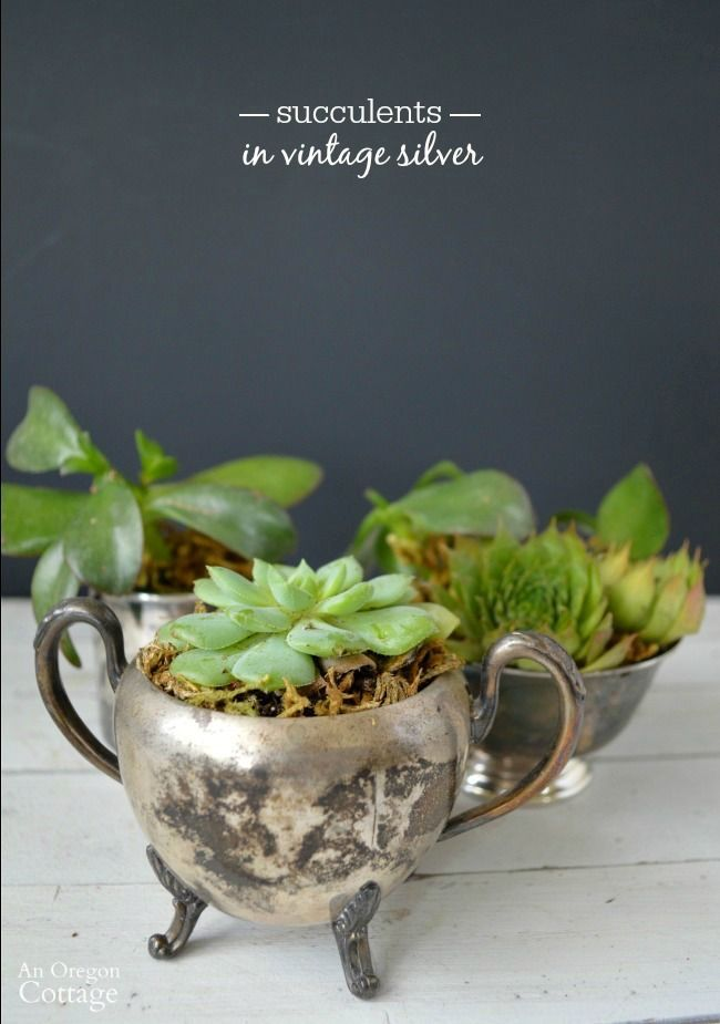 Raid your grandma's closet or a thrift store and make sweet gifts or decor by planting succulents in vintage silver containers.
