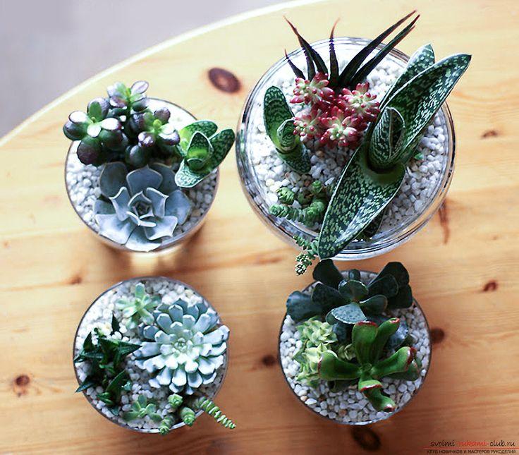 Создаем очаровательные настольные мини сады из сочных комнатных цветов – суккулентов и кактусов