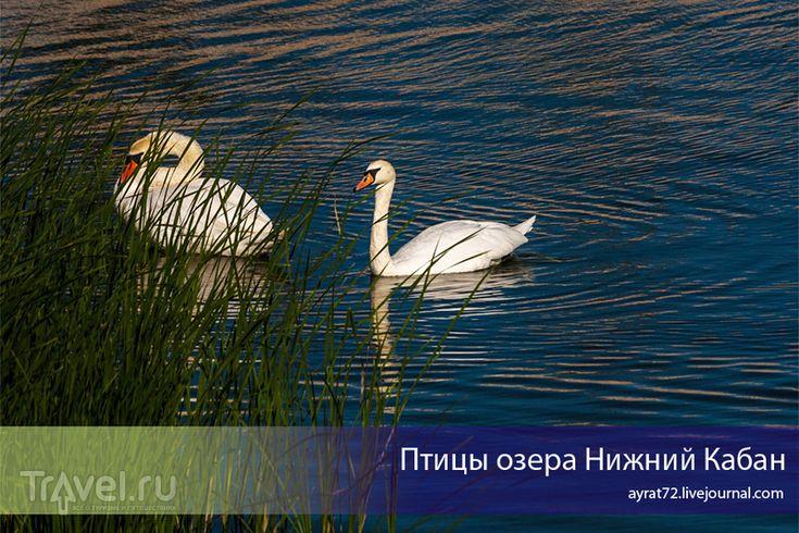 Птицы озера Нижний Кабан