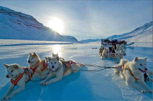 Dog sledding in Greenland.....what a peaceful picture.