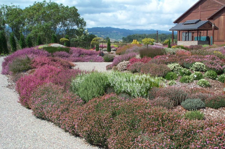 layers of heather and heath garden