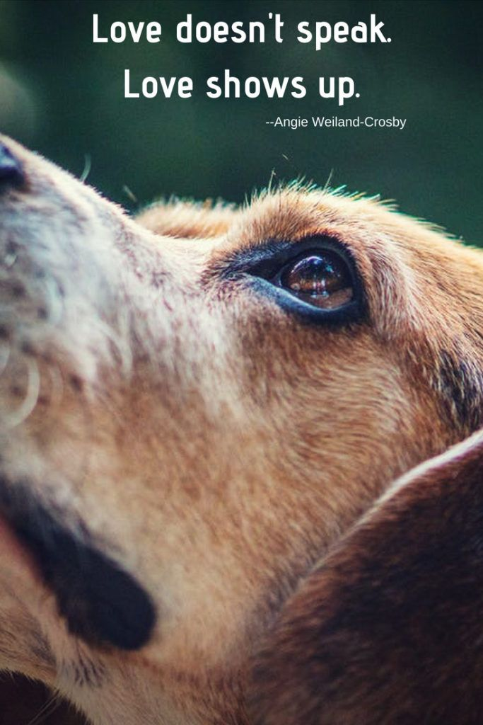 5 Inspirational Quotes To Soothe Your Soul Easiest Dogs To Train
