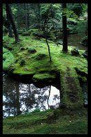 Moss Garden, Kyoto Japan