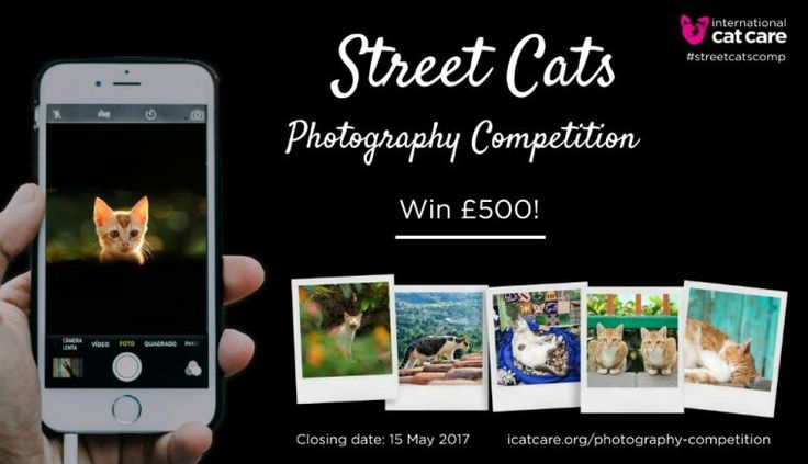 Win 500 Pounds. Participate in Street Cats Photography Competition @UK. Deadline May 15. https://katzenworld.co.uk/2017/04/10/photo-competition-launched-to-raise-awareness-of-street-cat-plight/