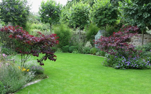 This is how the garden looks after two years: Pleached limes, Cercis 'Forest Pansy' filling in anb the perennial understorey developing: http://www.dyg.ie/back-garden-dublin-4