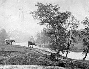 View of Cooks River from Riverview Road, Earlwood, 1904