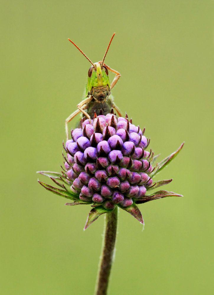 Confused Grasshopper - Matt Cole - Kew Gardens Botanical Prints - Kew Botanical Prints