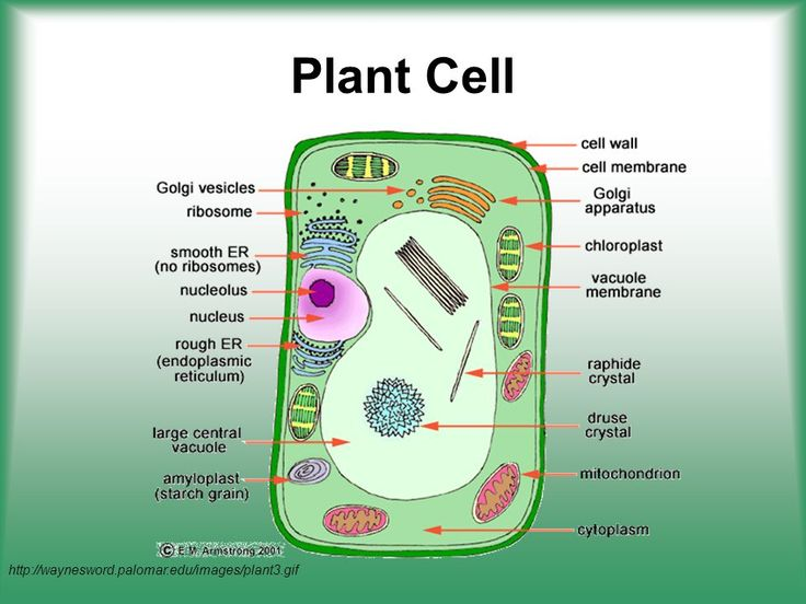 Cell Structure & Function - ppt video online download in ...