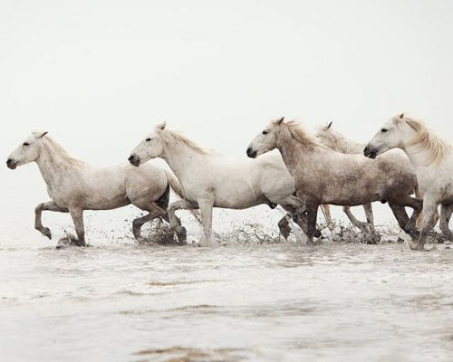 Western: Sea Horses, Irene Suchocki, Animals, Seahorses, Art, Beautiful, White Horses, Photography, Wild Horses