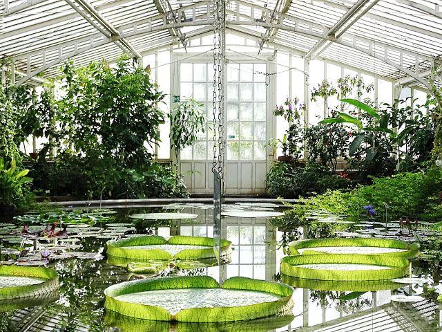 Auf der Mammilade|n-Seite des Lebens: Wohnen in Grün - Ein Tag in München, eine Verlosung für alle Pflanzenfreunde und die Präsentation des Urban Jungle Book im Botanischen Garten