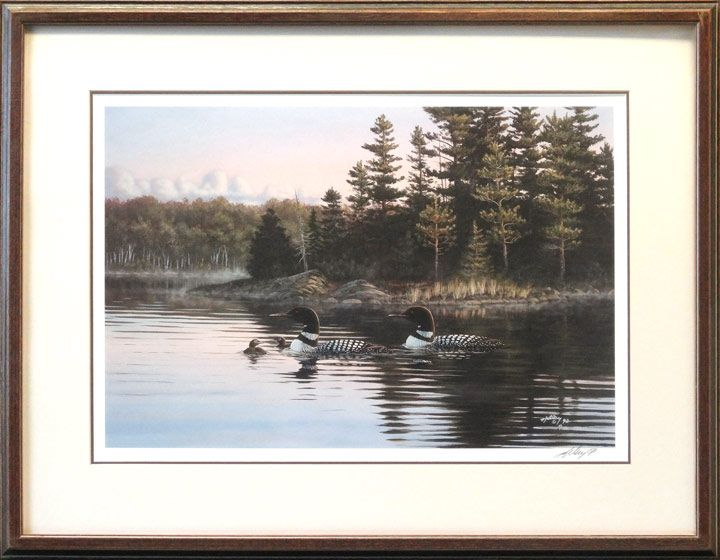loons signed edition fine art print by kelley of loons on a lake image size 16 x 24 inches frame size 26 x 34 inches