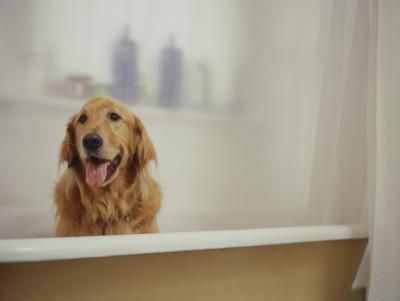 Recipe for Homemade Oatmeal Soap for a Dog's Skin
