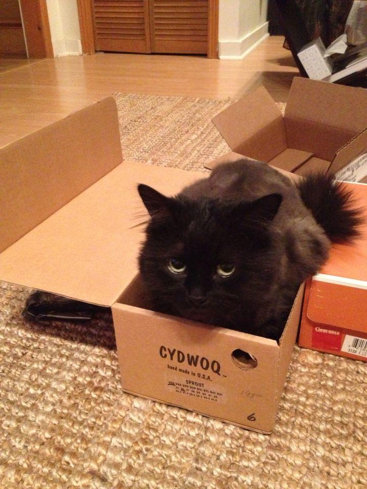 Georgie in a box