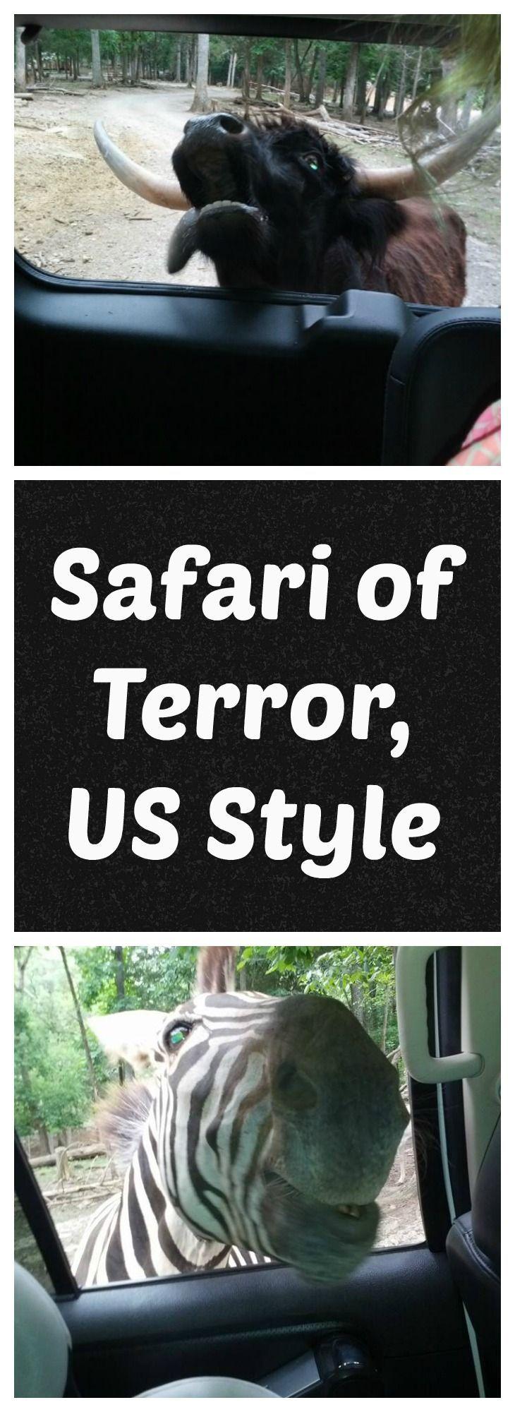 Safari of Terror Bible BeltFunny 51
