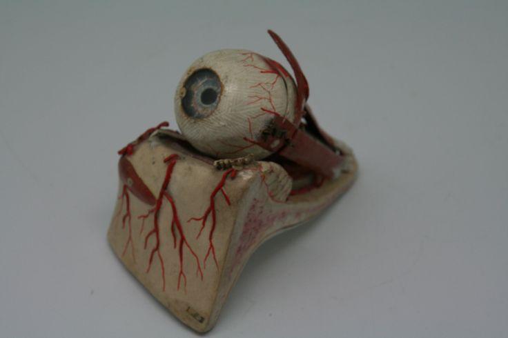 Model van het menselijk oog door Auzoux in papier maché.