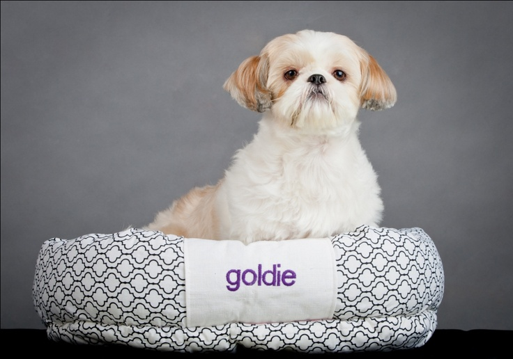 royal goldie and bed  http://koon-beds.tumblr.com/