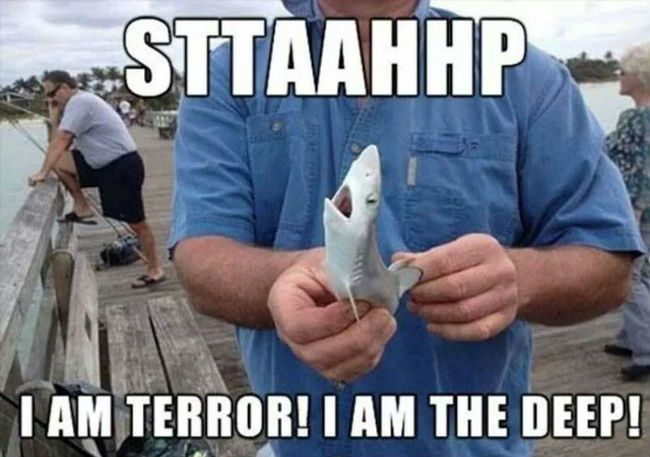 welcome to Shark Week