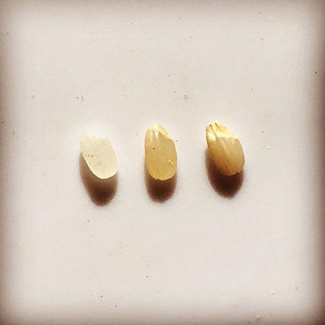 """2016/11/09 11:46:54 ry0_high.bridge 左から コシヒカリ白米、コシヒカリ玄米、金のいぶき  世界中から栄養価が高いと注目されている日本食! その代表となるお米! その中でも玄米は栄養価が高く玄米を取っていれば1日に必要な栄養素を補えると言われているほど! まだ市場では販売されていませんが、こちらの""""金のいぶき""""は普通の玄米より胚芽が大きく 普通の玄米の3倍の栄養があります(b_d) *写真を見ていただけると分かると思います!  ①一汁三菜→飯、汁、漬物、煮物、焼物、膾 ②一日30品目→飯、汁、30種類のバラエティあるおかず 上記2つは何が違うか、それは主食となるお米を玄米にしてれば① 白米なら②の食事にしないと1日に必要な栄養は取れていないという事です! 他にも農薬・化学肥料などで野菜本来の栄養価が下がってきてること 膾には食品添加物など上げたらきりがありません!  御自身の健康、家族の健康、お子さんがいる方は子供の健康、また美容など まずは白米から玄米に変えてみるのはいかがでしょうか^o^…"""