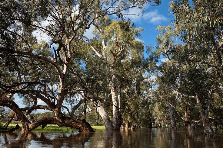 www.OzBC.net - Australian Backcountry Skiing - Minor Flooding on Murrumbidgee - October 2010