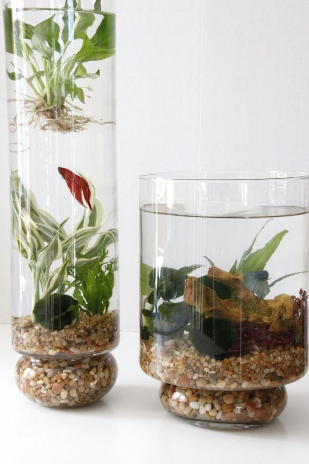 Deco nature DIY pour faire rentrer le feuillage : clemaroundthecorner #fish #aquarium