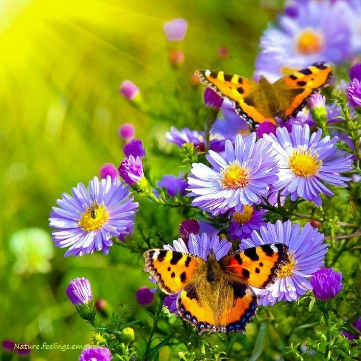 Butterfly Absorb the Honey from Flower | Most Beautiful Images ...