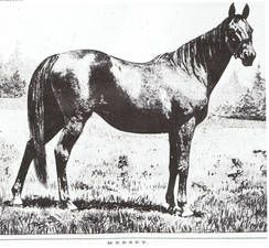 Mersey (GB), dam of the mighty Carbine (NZ).