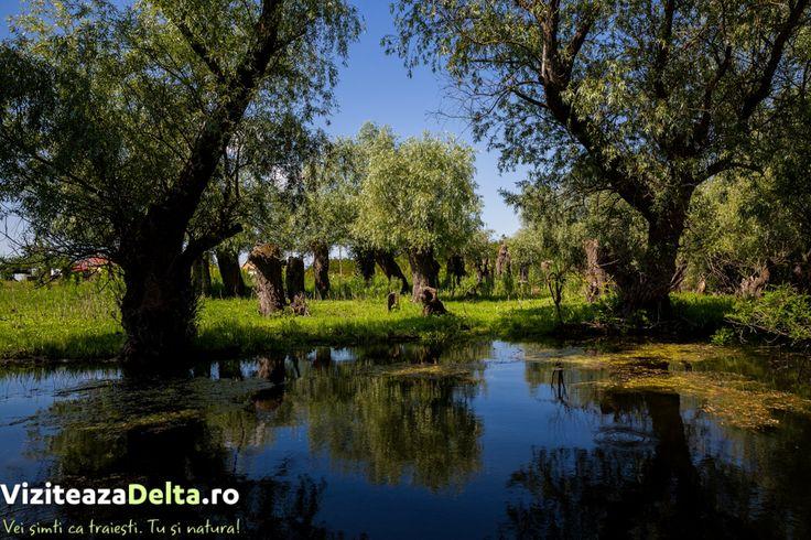 În antichitate, pe locul viitoarei cetăți Chilia, a existat o cetate grecească 🏛 Achillea. Numele acesteia a venit de la numele eroului grec Ahile, înmormântat, potrivit legendei, la gurile Dunării. La sfârșitul secolului al XIV-lea, Mircea cel Bătrân extinde teritoriul Țării Românești ⚔ până la Marea Neagră 🌊, Chilia intrând astfel în componența statului muntean. #viziteazadelta 😍