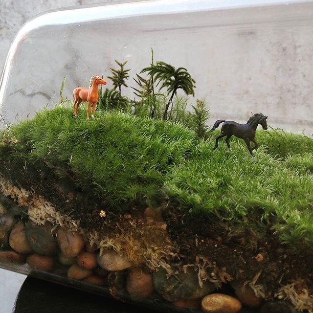 【marolien2】さんのInstagramをピンしています。 《草原を走り出す馬。今年はこれにて。皆様良いお年を😊#plants#green#platycerium#moss#mossgarden#lovegreen#indoorgarden#indoorplants#mossterrarium#terrarium#苔#苔テラリウム#テラリウム#植物のある暮らし#観葉植物#interior#インテリア#プライザー#ジオラマ#preiser》