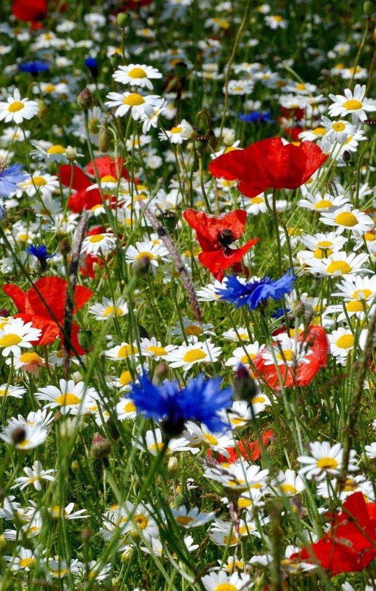 25 Beautiful Wildflower Field Ideas flowers flowergarden