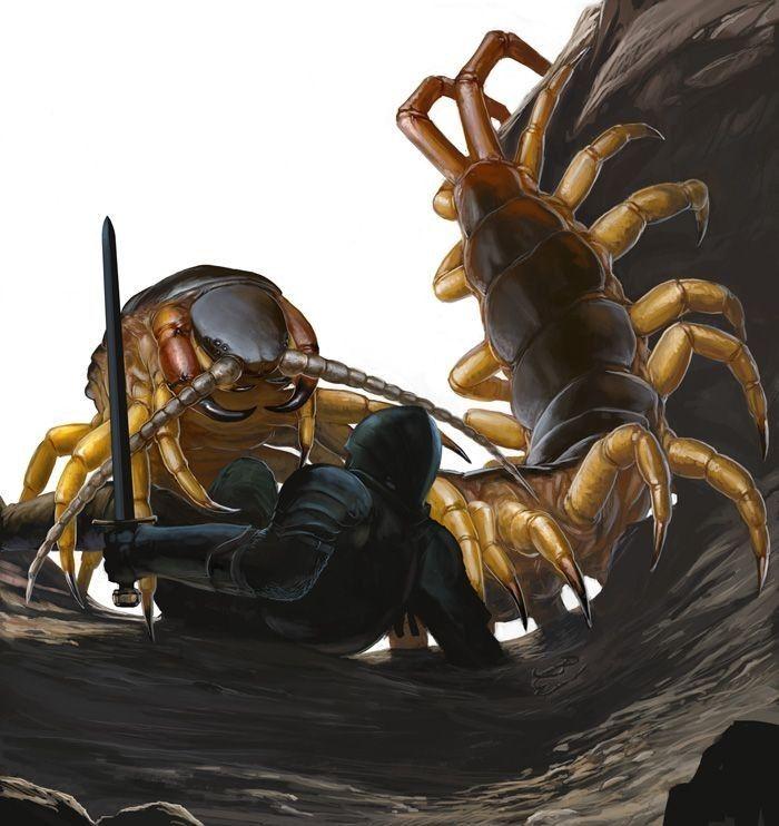 蜈蚣 おしゃれまとめの人気アイデア Pinterest 天 クモ ムカデ 動物