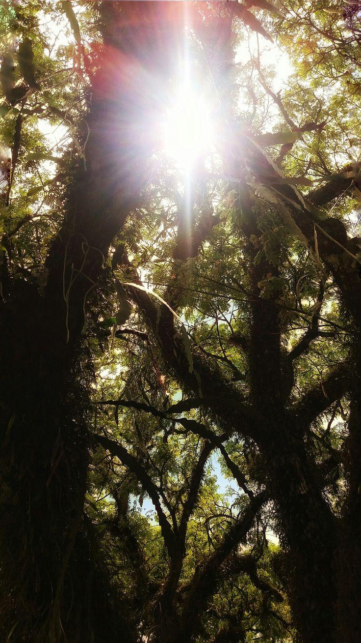 Naturaleza y luz