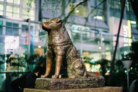 Hachiko!  Shibuya Station, Tokyo, Japan. Great story for any pet lovers.  (I want to cry.)