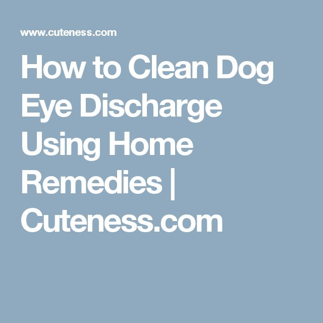 Dog Discharge From Eye Home Remedy