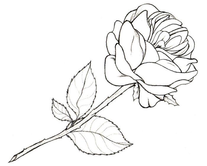 1001 Modeles Et Conseils Pour Apprendre Comment Dessiner Une Rose Dessin Rose Comment Dessiner Une Rose Comment Dessiner