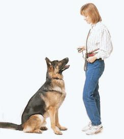 Dog training DIY: Why is it good to train your dog? Puppy progress
